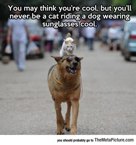 cool-cat-riding-dog-cool