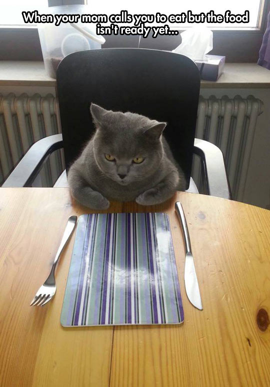 cool-cat-waiting-meal-kitchen-table