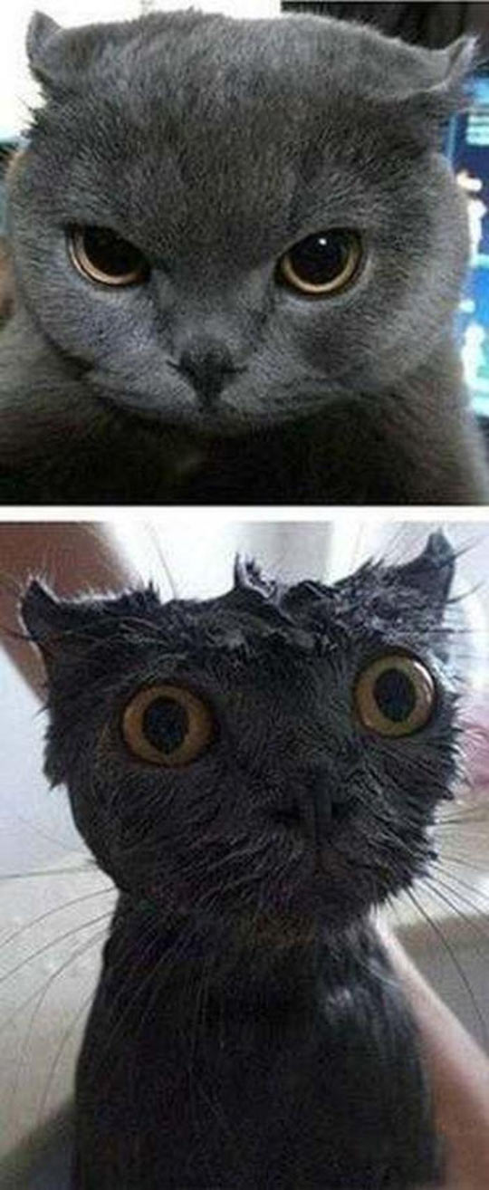 cool-cat-wet-water-mad-grey