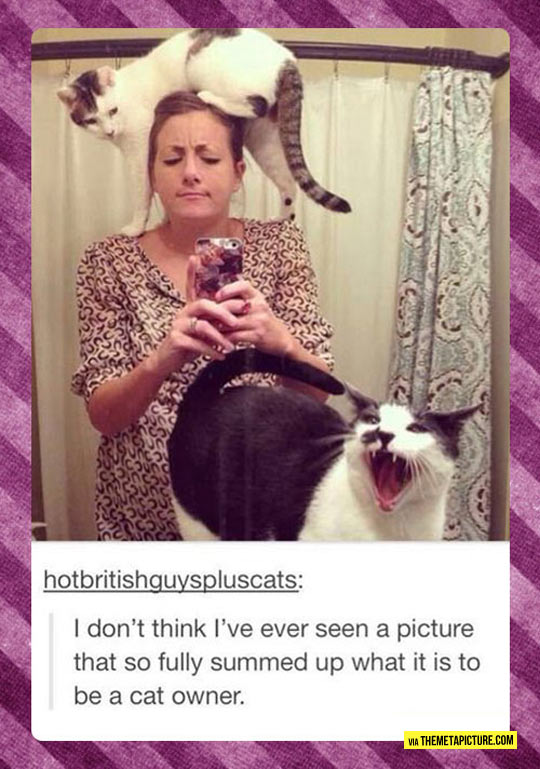 Cat Owners In A Nutshell