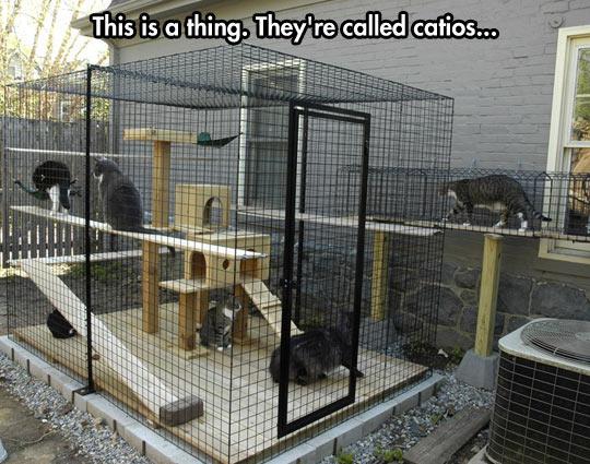 Catio In The Backyard