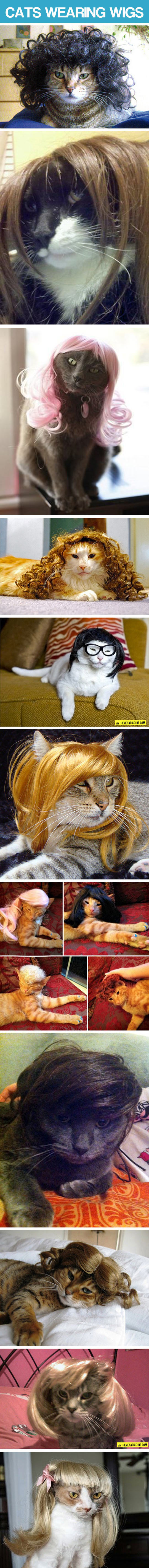 cool-cats-wearing-wigs-compilation