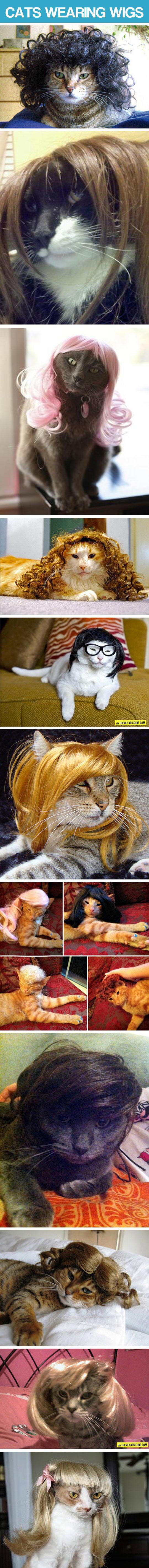 Kitties Wearing Wigs