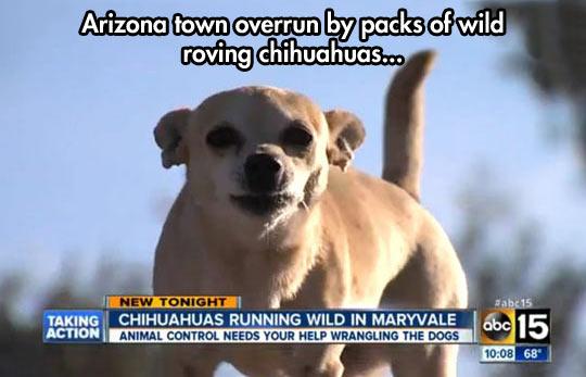 Arizona Is Doomed