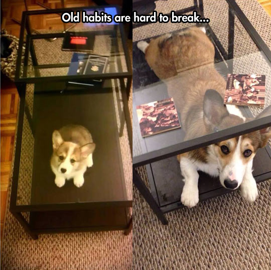 Once A Little Dog, Always A Little Dog