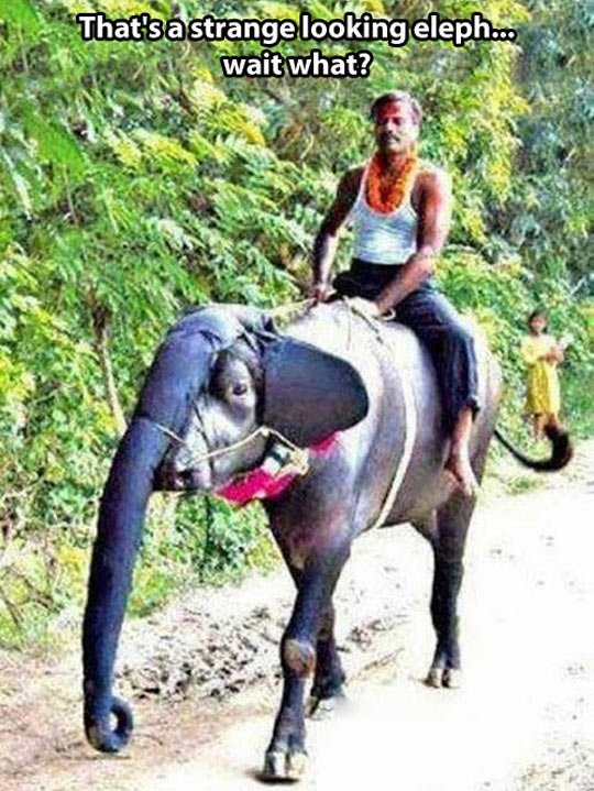 cool-cow-costume-elephant-riding