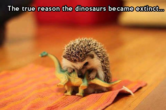 cool-dinosaurs-hedgehog-pet-attack-bite