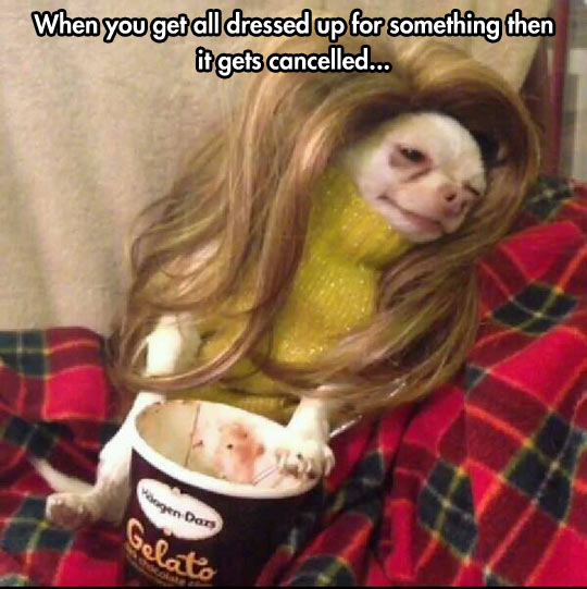 cool-dog-dressed-ice-cream-wig