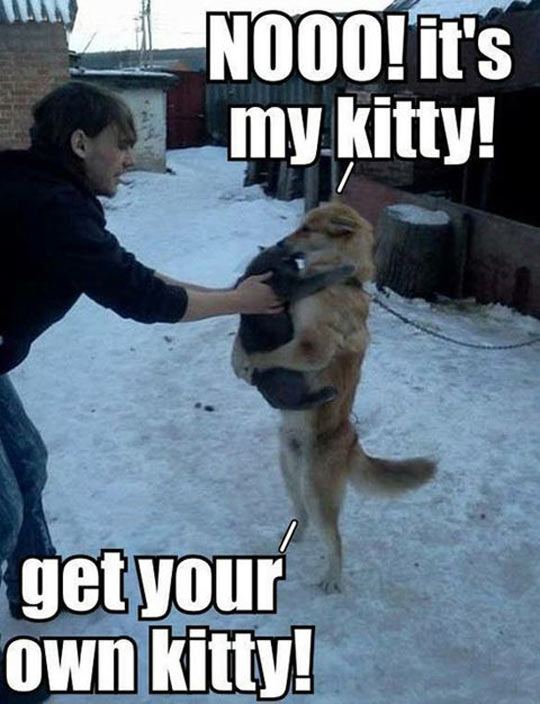 cool-dog-guy-kitty-fight