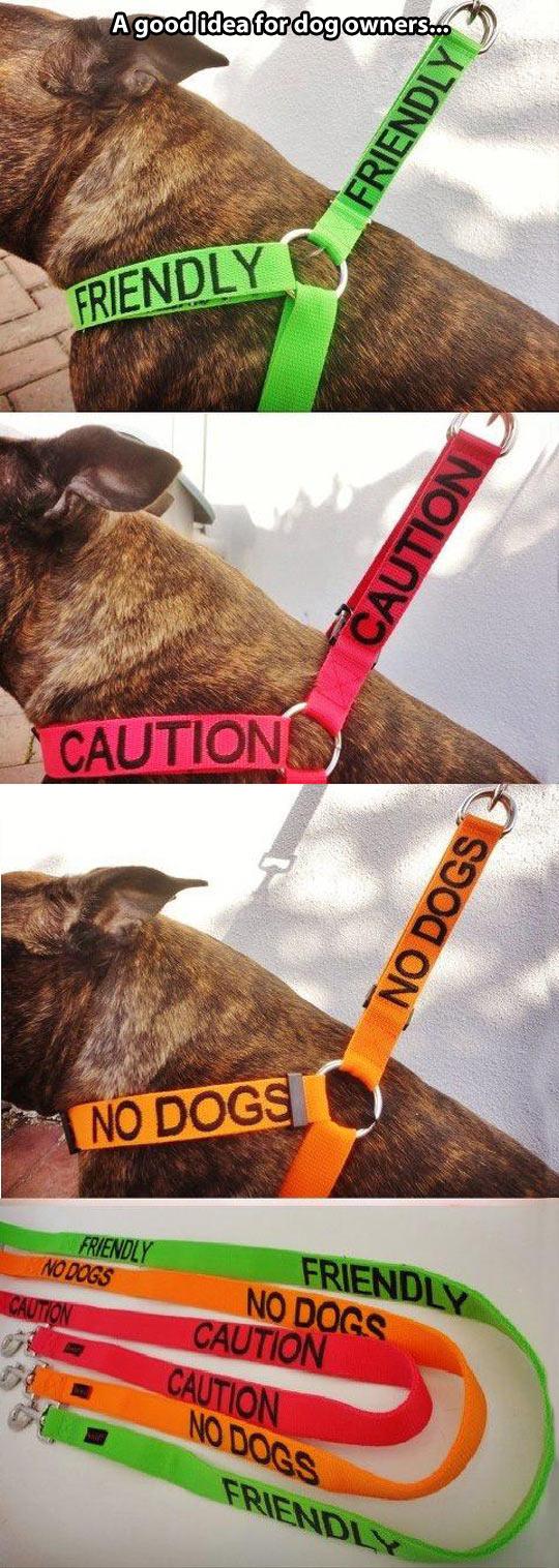 cool-dog-leash-color-caution-friendly