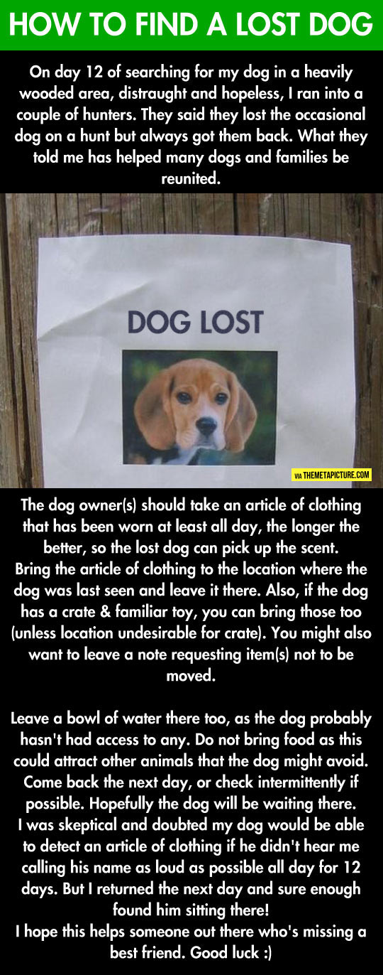 If You Ever Lose Your Dog, This Will Probably Help You