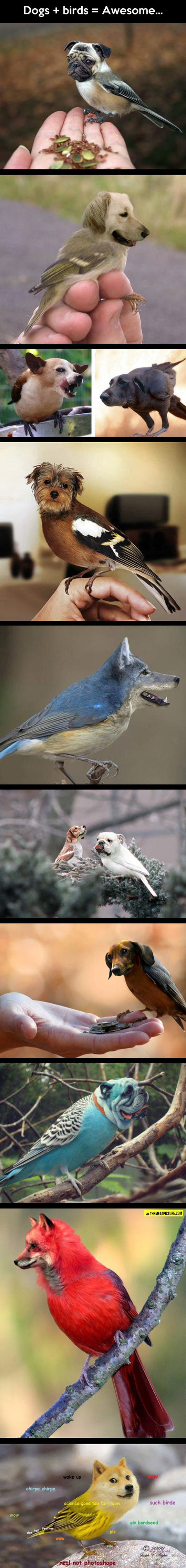 When You Mix Dogs And Birds