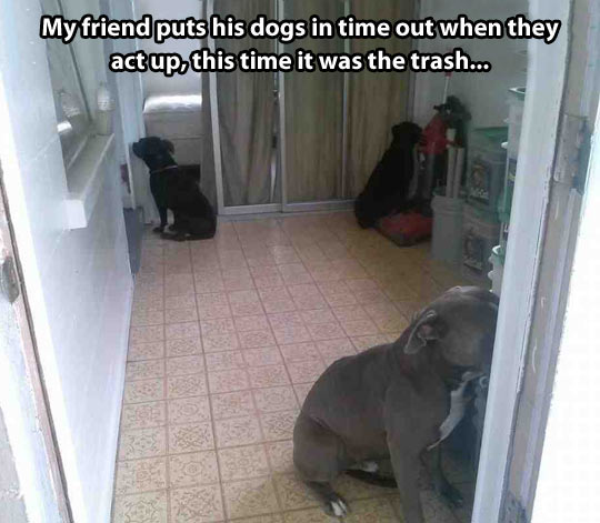 Dogs In Time Out