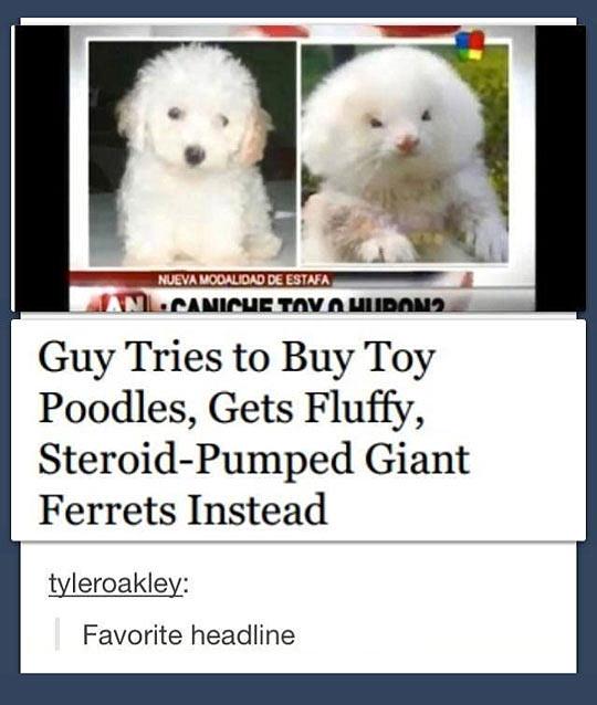 This Is My Favorite Headline