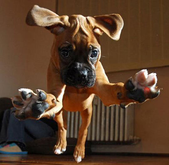cool-jumping-puppy-ears