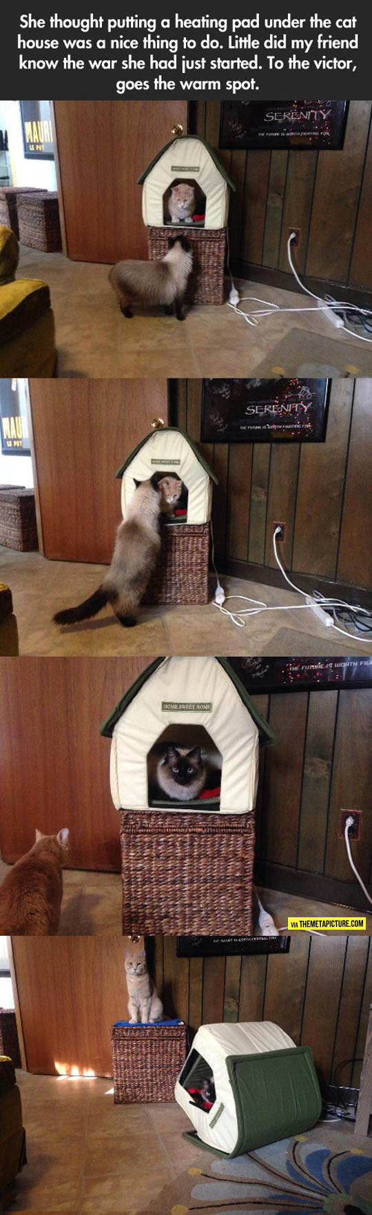 cool-kitty-kitten-cat-king-house