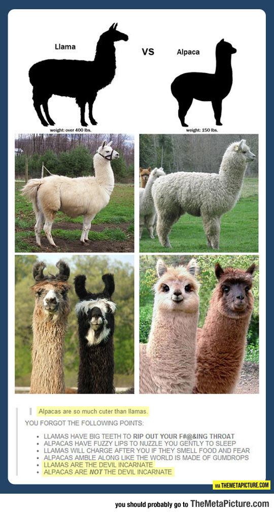 cool-llama-alpaca-cute-devil