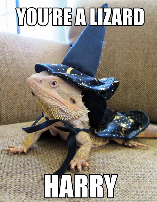 Lizard The Wizard