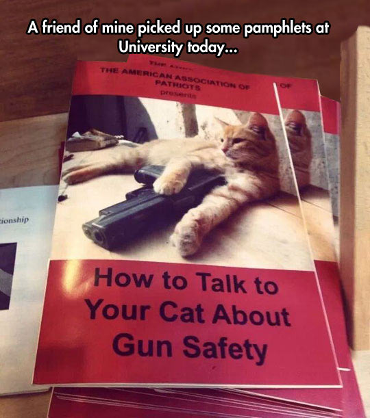 Important For Some Felines