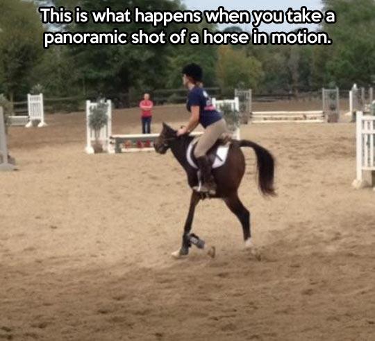 Panoramic Horse