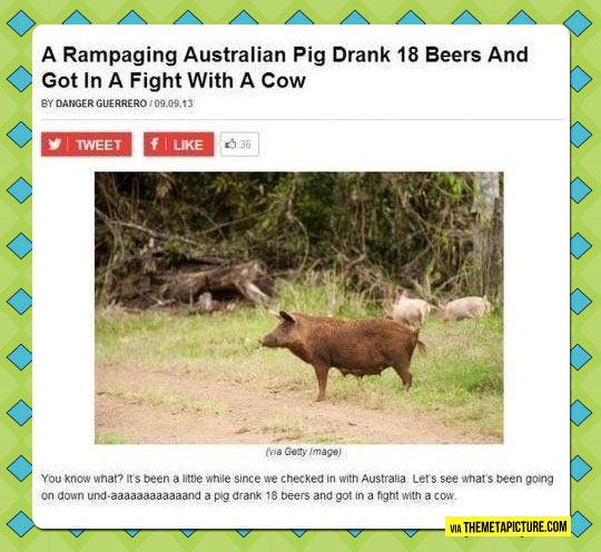 Australian Pig