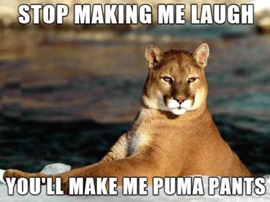 cool-puma-stare-laugh-pants