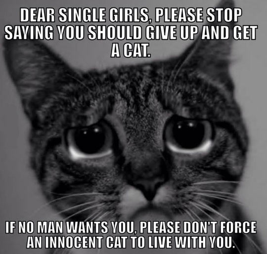 cool-sad-cat-single-girls
