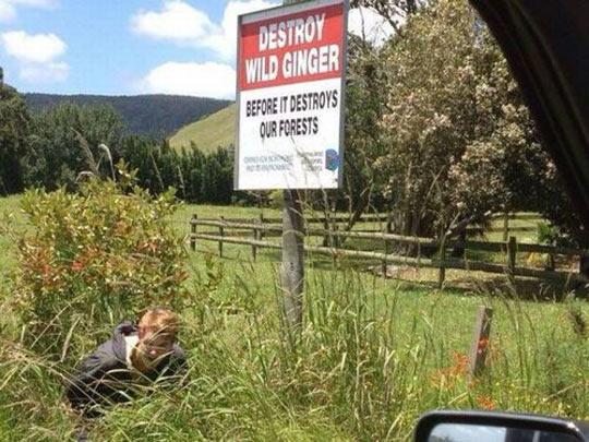 cool-sign-forest-destroy-wild-ginger-grass