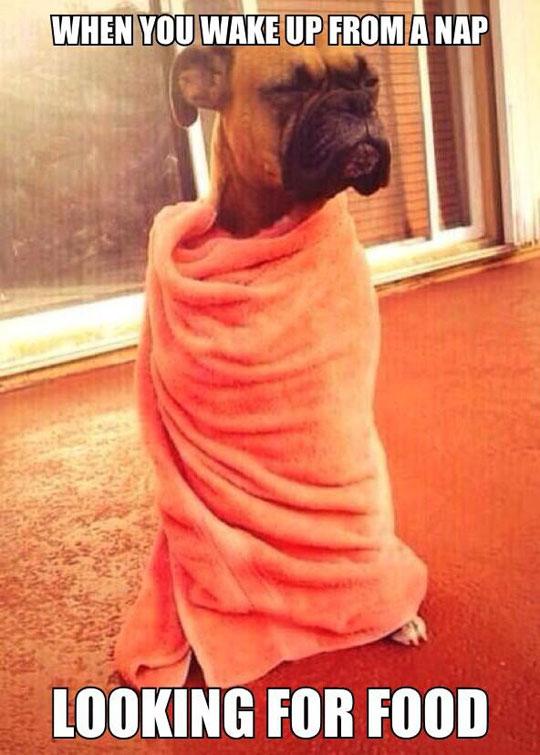 cool-sleepy-dog-food-towel-nap