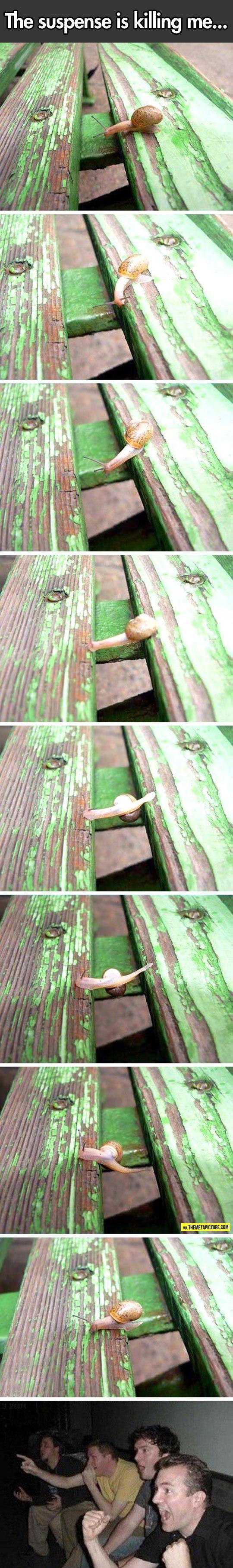 cool-snail-time-slow-suspense
