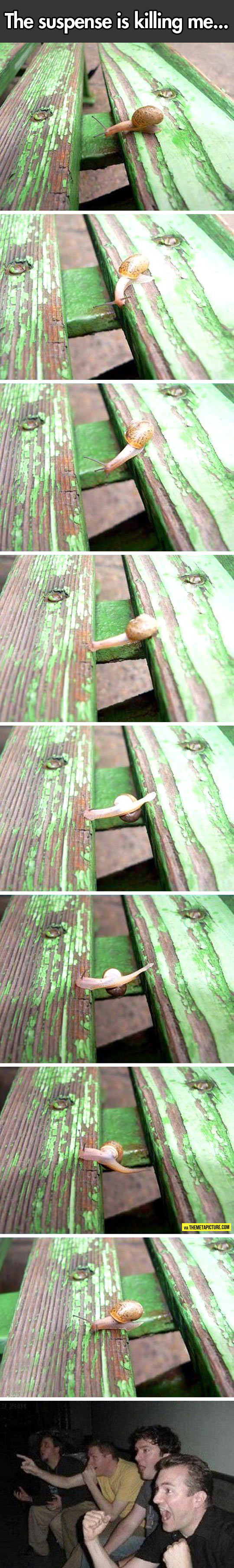 This Snail Loves Parkour