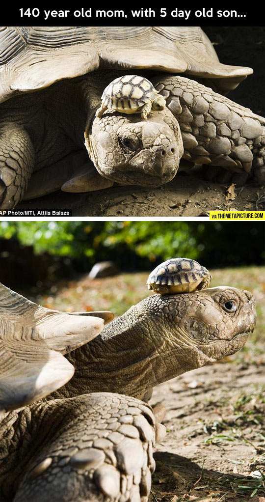 cool-tortoise-old-son-little