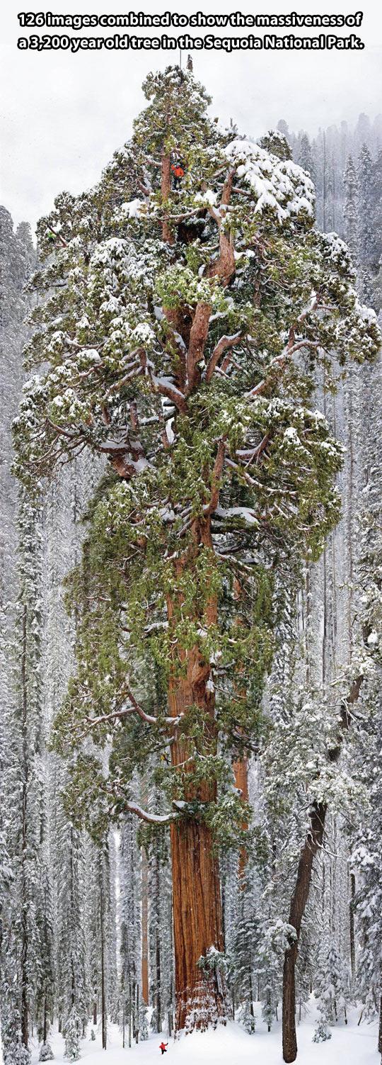 Massive Tree