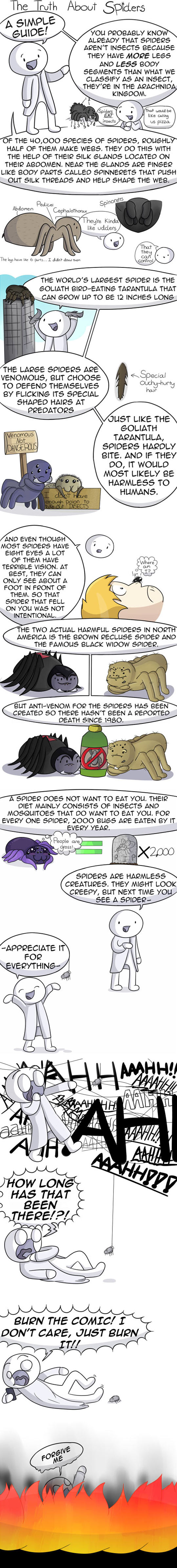 Simple Guide About Spiders