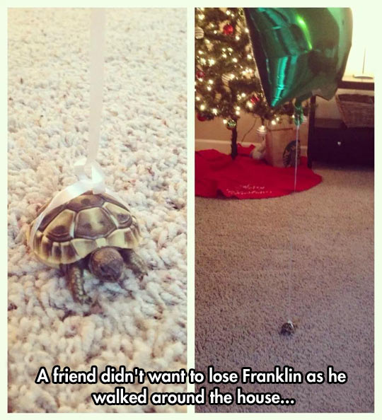 He Will Never Lose His Tortoise Again