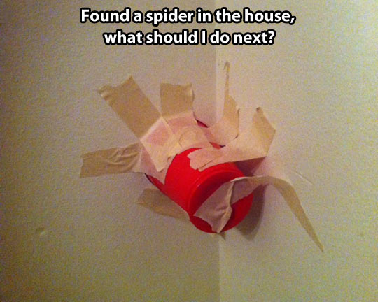 cool-wall-cup-tape-spider