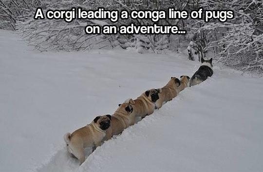 cool-winter-corgi-pugs-snow-line