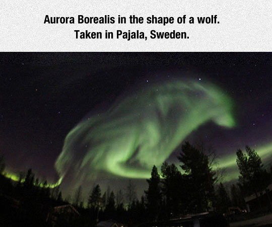 cool-wolf-Aurora-Borealis-sky