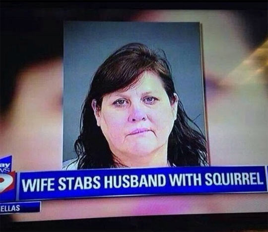 cool-woman-TV-news-stab-husband-squirrel