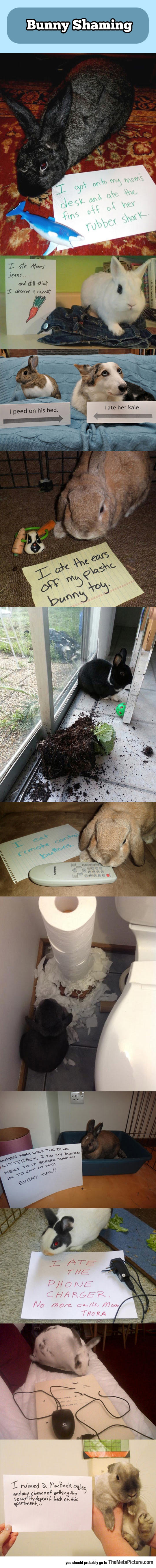 cute-bunny-shame-signs