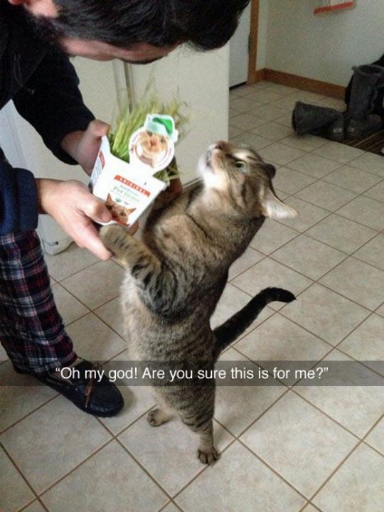 cute-cat-grass-happy