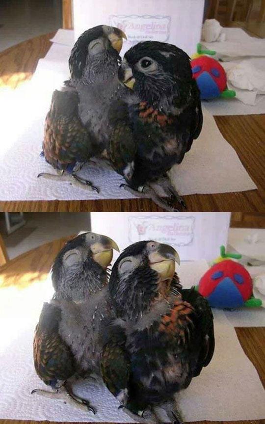 cute-parrots-striking-pose-smiling