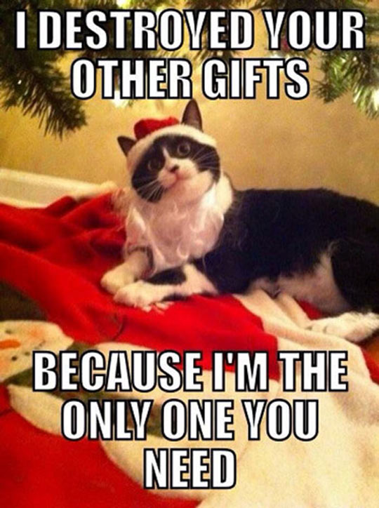 Overly Attached Holiday Cat