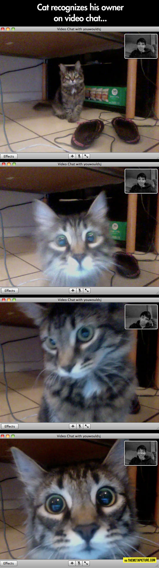 funny-cat-screen-video-call-owner