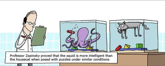 funny-comic-squid-cat