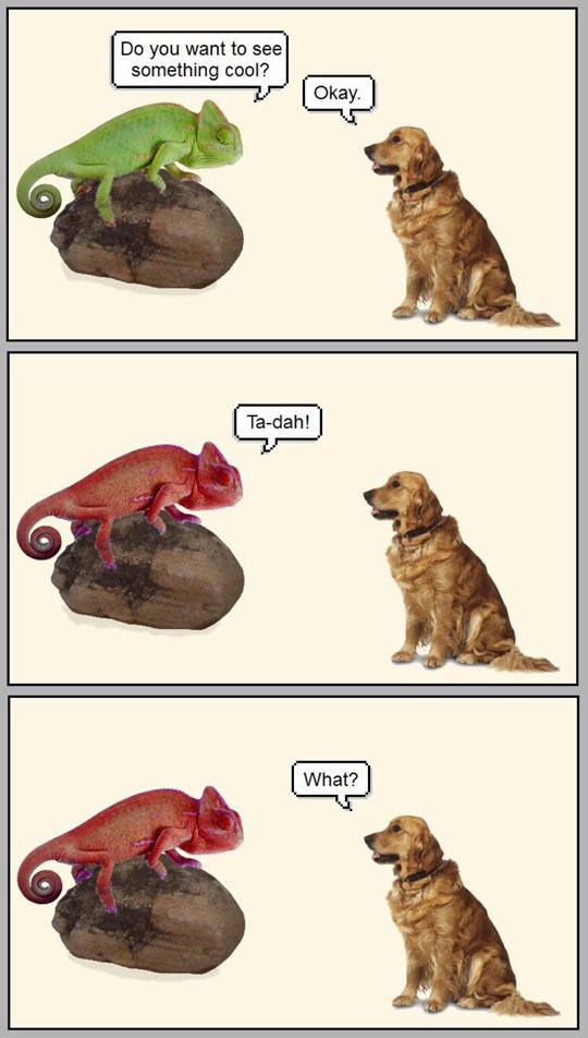 funny-dog-chameleon-colors