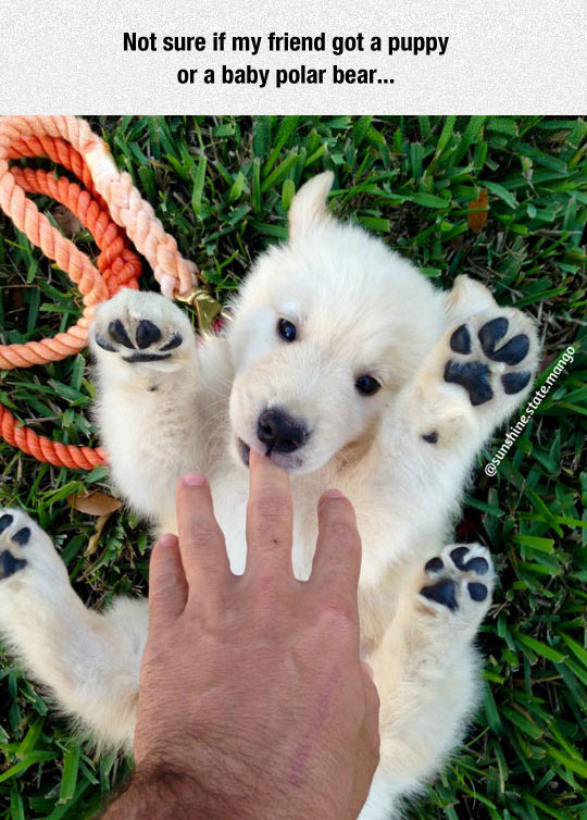 funny-dog-polar-bear-puppy