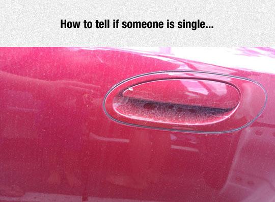 funny-spider-web-car-single
