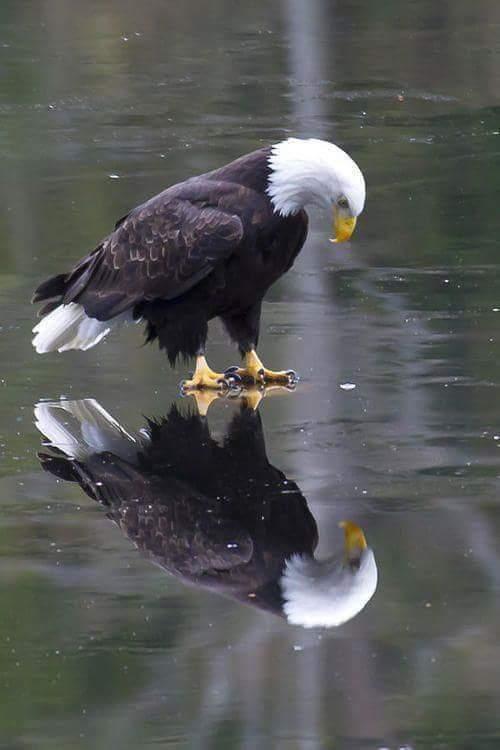 Amazing photo of eagle standing on ice