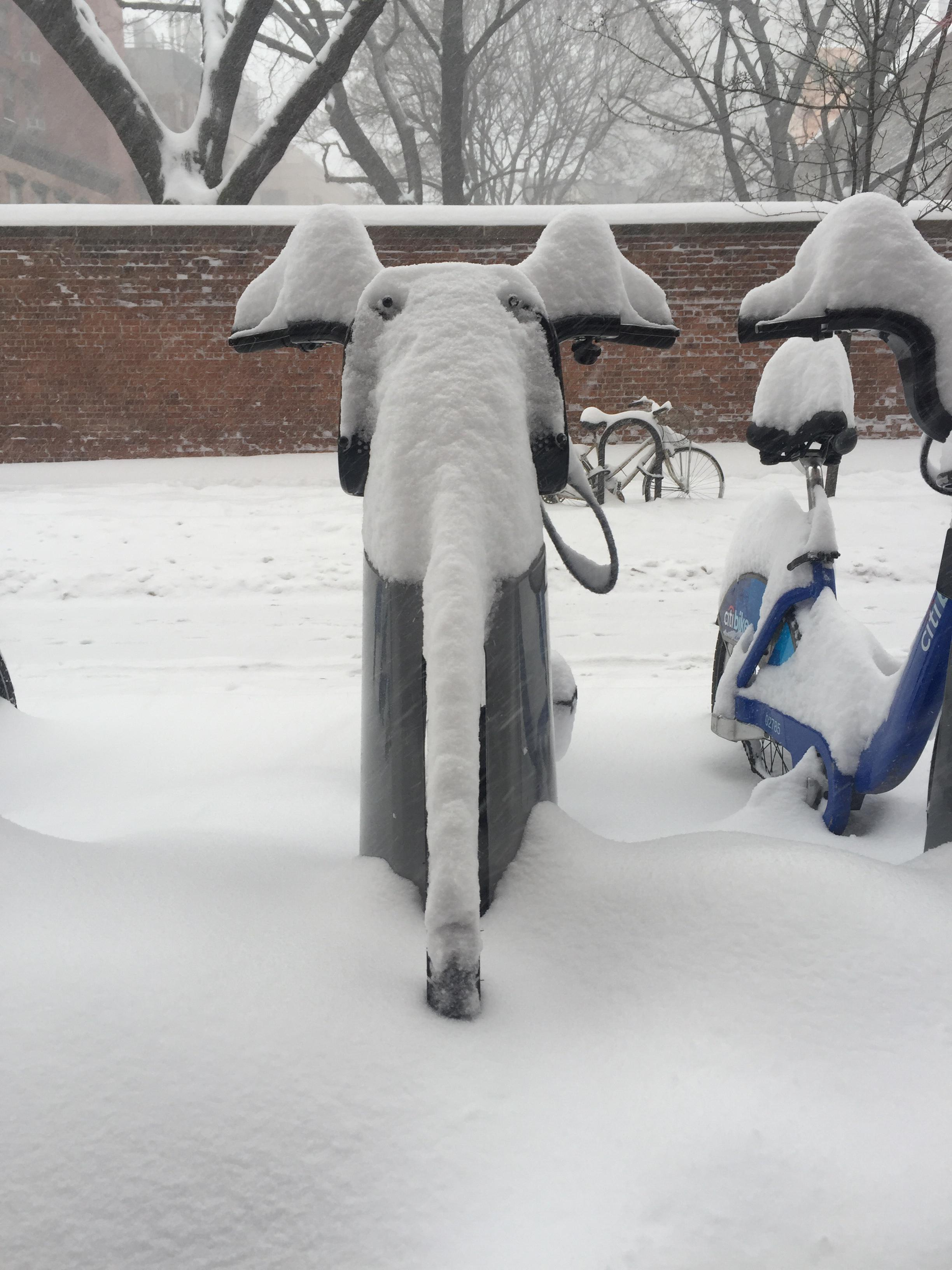 Blizzard turned this Citi Bike into an elephant.